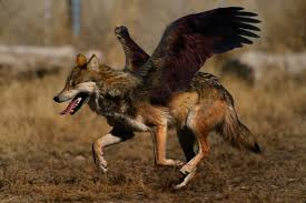 eagle wolf amoux by laserbot on deviantart