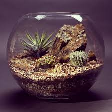 terrariums bioattic specialty plants