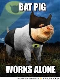 Bat Meme - awesome bat meme bat pig meme generator captionator kayak wallpaper