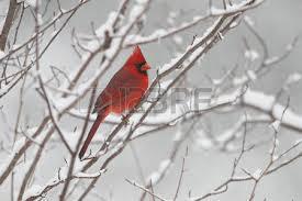 Ontario Backyard Birds Backyard Birds Images U0026 Stock Pictures Royalty Free Backyard