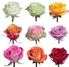 Bulk Flowers Wholesale Bulk Roses For Sale Wholesale White Roses Wholesale