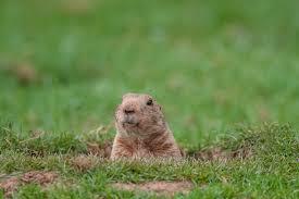 avoiding groundhog aws