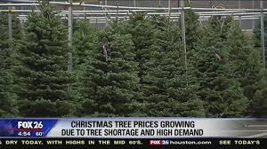 christmas tree prices christmas tree prices rise due to shortage and high demand