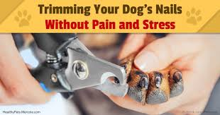 how to trim a dog u0027s nails without stress and pain