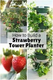 Diy Strawberry Planter by 10 Space Saving Strawberry Garden Gardening Planter Ideas