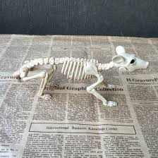 Halloween Horse Skeleton by Compare Prices On Halloween Plastic Skeleton Online Shopping Buy