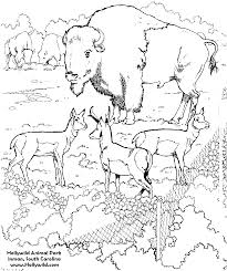 forrest animals coloring pages coloring factory