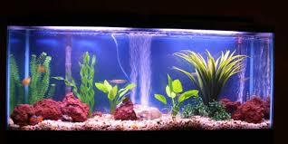 tropical fish tanks page 6