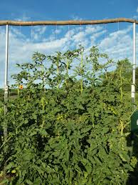 whizbang trellis instruction how to maket post trellis spans