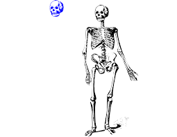 spooky skeleton png january 2017 u2013 page 39 u2013 clipart free download