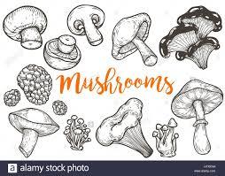 mushroom hand drawn sketch vector illustration mushroom shiitake