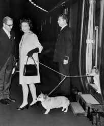 queen elizabeth dog queen elizabeth ii and a few of her prized pooches alighted on a