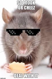Rat Meme - rat imgflip