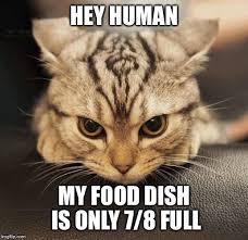 Mad Cat Memes - mad cat imgflip