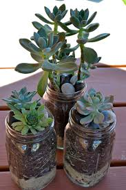 the domestic doozie mason jar succulent planters