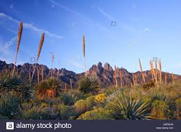 New Mexico vegetaion images Desert vegetation and organ mountains near las cruces new mexico jpg
