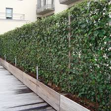 ivy screens from impact plants living fence panels u0026 hedging screens