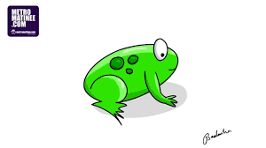 how to draw frog easy steps youtube