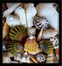 colors hawaiian sunrise shell u0026 puka shells