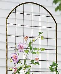 Obelisk Trellis Metal Trellis Guide How To Choose The Best Supports For Climbing Plants