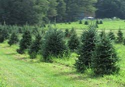 Christmas Tree Pick Up Final Week For Christmas Tree Pickup Town Of Scarborough Maine