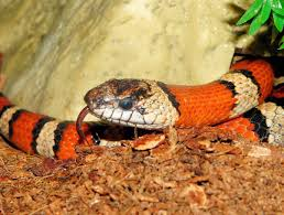 orange and white wallpapers orange and white snake free image peakpx