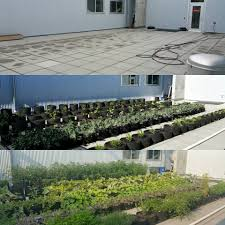 Urban Home Victoria Gardens - urban farmers u0027 alliance of victoria home facebook