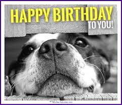 Birthday Meme Dog - happy birthday memes with funny cats dogs and cute animals love
