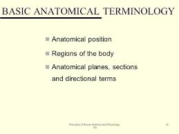Human Anatomy Planes Of The Body An Introduction To The Human Body Lecture Outline Ppt Download