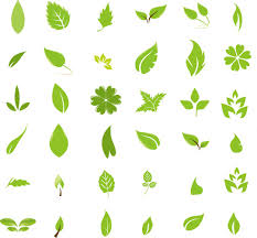 free graphic design green leaf design elements free vector