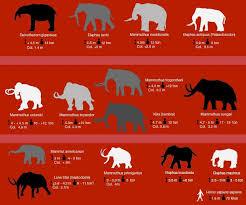 arsinoitherium related elephant species extinct