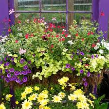 Flower Boxes That Thrive In by Flowers For Sunny Window Boxes