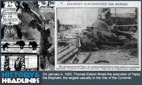Thomas Edison Electric Chair January 4 1903 Killer Elephant Topsy Executed During Electric