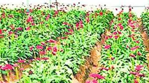 Plastic Flowers Pune Farmers Demand Ban On Plastic Flowers Flooding City During