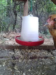 easy and cheap tips and tricks for raising backyard chickens