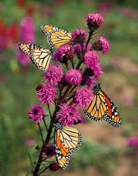how to plant a butterfly garden the high country gardens blog