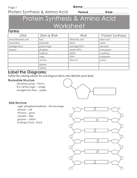 Dna Rna And Protein Synthesis Worksheet Protein Synthesis Amino Acid Worksheet