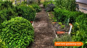 herb gardens growing a kitchen herb garden epicurious com epicurious com