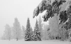 hd snow pine wallpapers download free 889464