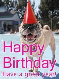 birthday pug card birthday greeting cards by davia