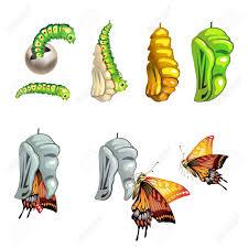 2 494 larva stock vector illustration and royalty free larva clipart