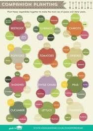 the 25 best vegetable garden design ideas on pinterest
