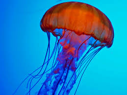 jellyfish inspired artificial skin glows when it u0027s in pain