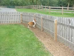 better than a dog run u2014 yard ideas for your four legged family