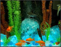 aquarium glass aquarium glass uses and gallery