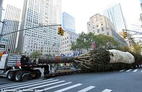 rockefeller christmas tree arrives in new york city daily mail