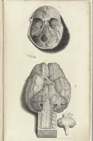 Parts Of The Face Anatomy Historical Anatomies On The Web William Cowper Home