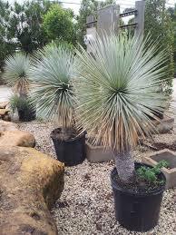 15 best botanics palms wholesale nursery homestead florida
