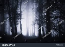 dark halloween background dark forest landscape background woodland night stock photo