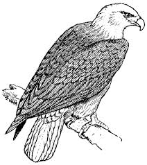 bald eagle coloring pages to print canvas painting pinterest